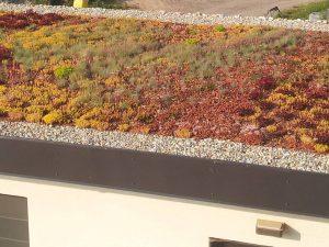 Vegetačná strecha ako trend – riešenie hydroakumulačnej a drenážnej vrstvy v skladbe vegetačnej strechy